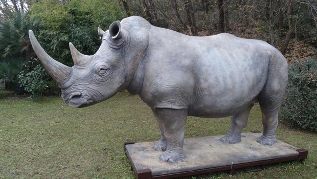 Un rinoceronte a Torino?