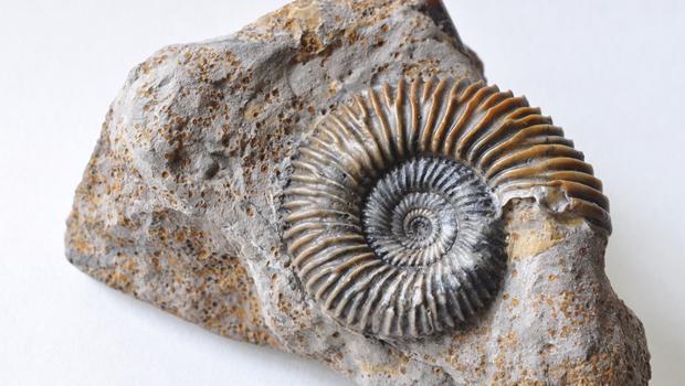 Ammoniti del Baiociano di Bayeux