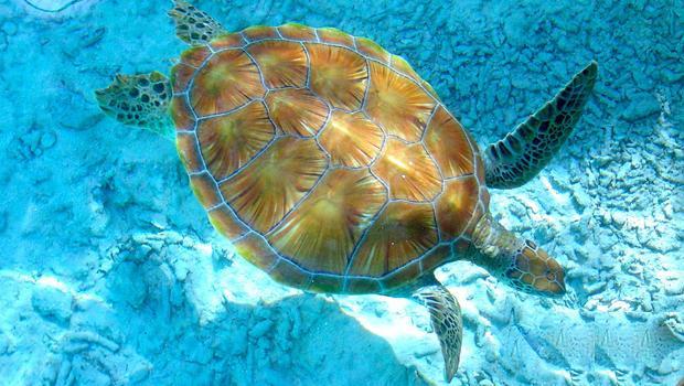 L'estinzione delle tartarughe ninja